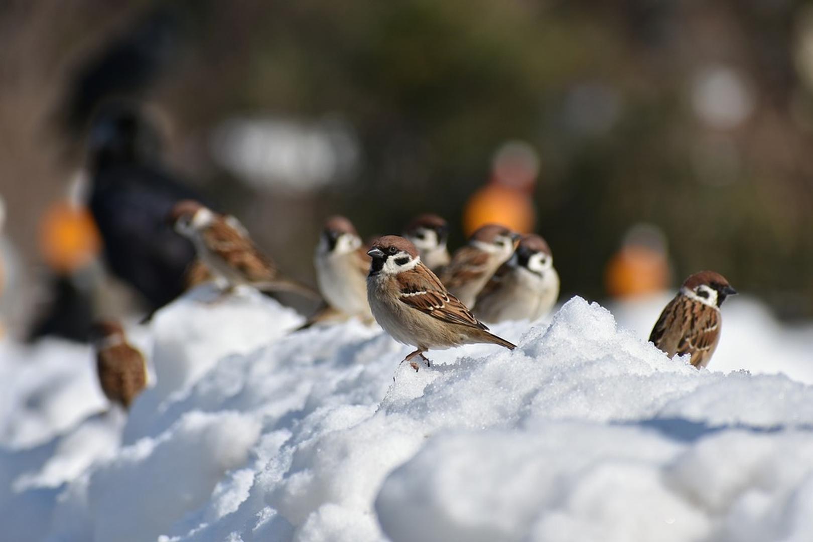 Vogel Futtern